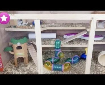 La NUEVA MANSIÓN DE COCO Hamster ¿Le gustará? Funny Videos Graciosos Animales - la nueva mansion de coco hamster le gustara funny videos graciosos animales