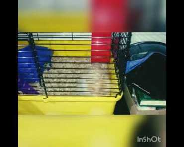 My cute hamster being funny - my cute hamster being funny