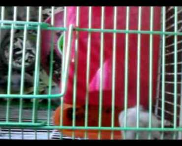 My funny hamster - my funny hamster
