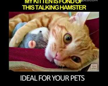 Talking Hamster Toy Plush Toy Funny Very Funny! - talking hamster toy plush toy funny very funny
