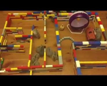 The Hamster Cam Trailer - the hamster cam trailer