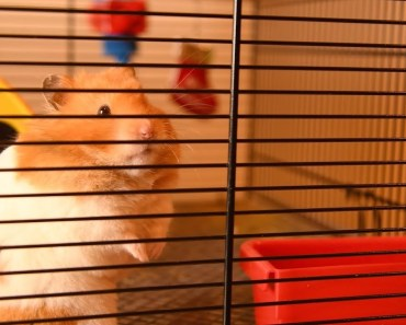 The Nut Before Christmas - The Talking Hamster - the nut before christmas the talking hamster
