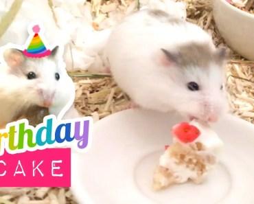 Tiny Hamster gets a BIRTHDAY CAKE! Cute Miniature Cake DIY - tiny hamster gets a birthday cake cute miniature cake diy