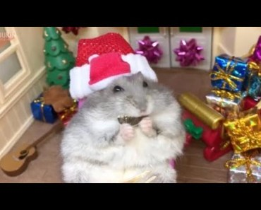 Tiny Santa hamster will get you excited for Christmas - tiny santa hamster will get you excited for christmas
