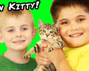 We Got A NEW Kitty Cat! Toy Surprise Egg + Play. Cat Rescue Family Fun HobbyKidsTV - we got a new kitty cat toy surprise egg play cat rescue family fun hobbykidstv