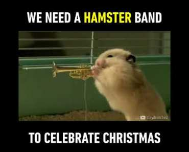 We need HAMSTER band to celebrate chrismas - we need hamster band to celebrate chrismas