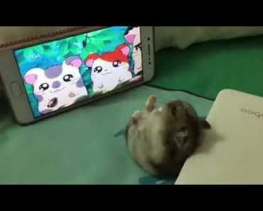 Funny Hamster - 1515568559 funny hamster