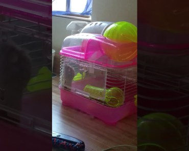 Funny hamster - 1516097066 funny hamster