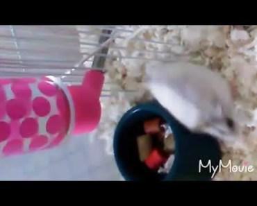 Funny hamster - 1516943837 funny hamster
