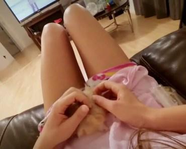 A Temperamental Hamster - a temperamental hamster