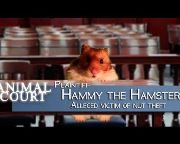 'Animal Court' - The Talking Hamster & The Bunny - animal court the talking hamster the bunny