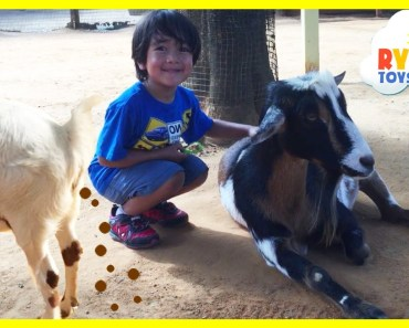 ANIMALS POOPING AT THE ZOO Kid at the ZOO Funny Family Fun Trip to Petting Farm Animals for Children - animals pooping at the zoo kid at the zoo funny family fun trip to petting farm animals for children
