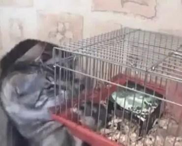 Cat Vs Hamster!! - cat vs hamster