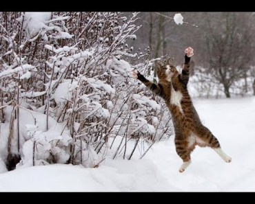 Cats Enjoying Winter and Snow - Funny Animal Videos Compilation 2018 [BEST OF] - cats enjoying winter and snow funny animal videos compilation 2018 best of