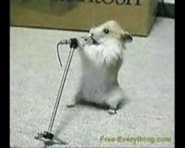 Crazy Hamster Dance - crazy hamster dance