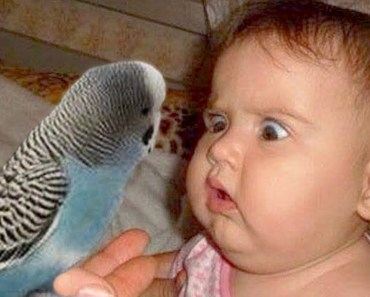 Cute Babies and Parrot are Best Friend - Funny Parrots Videos - cute babies and parrot are best friend funny parrots videos