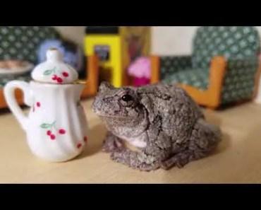 CUTE FROG MASHUP |VOLUME 1| - cute frog mashup volume 1