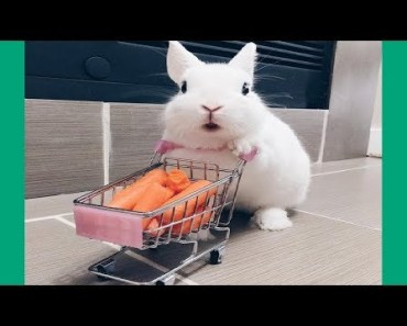 Funny Baby Bunny Rabbit Videos - Cute Rabbits Compilation 2018 - funny baby bunny rabbit videos cute rabbits compilation 2018