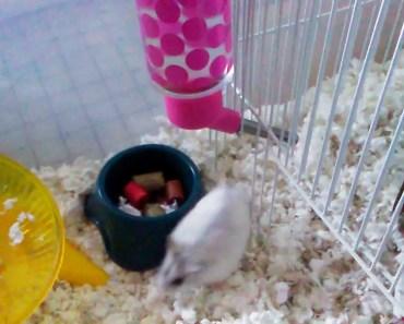 Funny hamster actions - funny hamster actions
