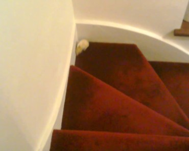 Funny hamster climbing the stairs - funny hamster climbing the stairs