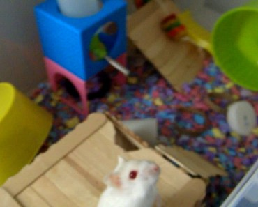 Funny hamster Video Part 2 - funny hamster video part 2