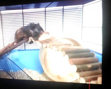 Funny hamster's - funny hamsters