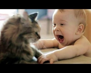 funny - Littil Kittens meowing and talking cute baby & cute cat compilation - funny littil kittens meowing and talking cute baby cute cat compilation