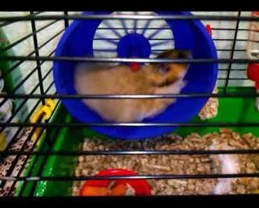 Funny sports life hamster video - funny sports life hamster video