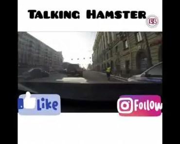 Funny Talking Hamster - funny talking hamster