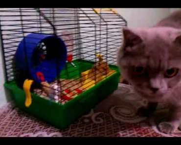 Funny videos cats and hamster - funny videos cats and hamster