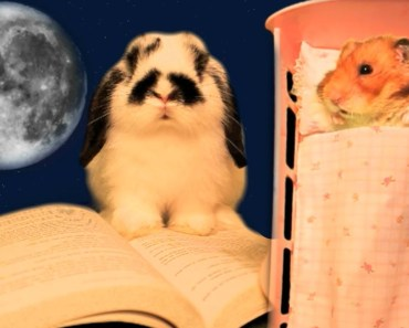 Hammy's Bedtime Stories by Bugsy - The Talking Hamster & The Bunny - hammys bedtime stories by bugsy the talking hamster the bunny