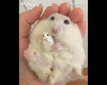 Hamster and its mini-me by nococo.k | 9GAGFunOff - hamster and its mini me by nococo k 9gagfunoff