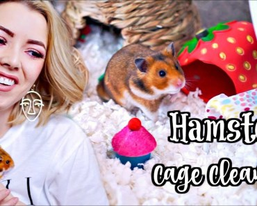 HAMSTER CAGE CLEANING & CAGE TOUR | Syrian Hamster - hamster cage cleaning cage tour syrian hamster