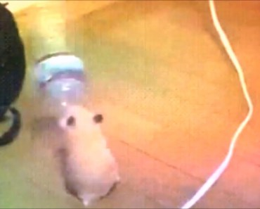 Hamster Dancing With Water Bottle (Full Version) - hamster dancing with water bottle full version