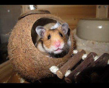 Hamster exercise wheel fail - hamster exercise wheel fail
