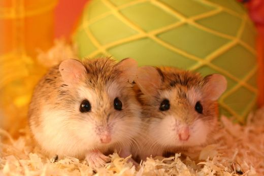 18 Types of Metaphors - Hamster Care Sheet & Guide - How to