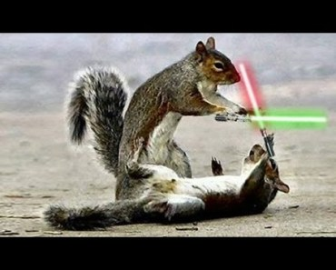JEDI CHIPMUNKS LIGHTSABER BATTLE - jedi chipmunks lightsaber battle