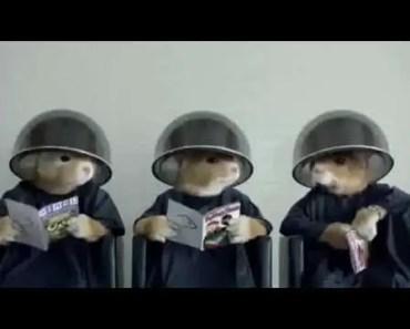 Kia Soul Hamster Commercial Lady Gaga Applause Banned Commercial - kia soul hamster commercial lady gaga applause banned commercial