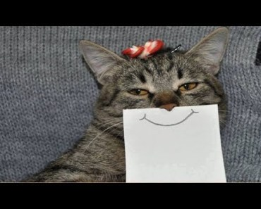 Most Patient Cats Ever! - most patient cats ever