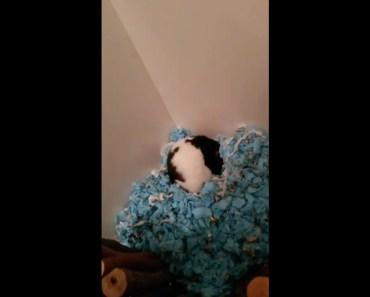 Oreo The Hamster - oreo the hamster