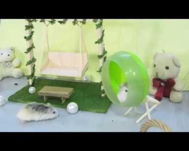 Playing with a New Swing - Funny Pets & Hamsters Activities - playing with a new swing funny pets hamsters activities
