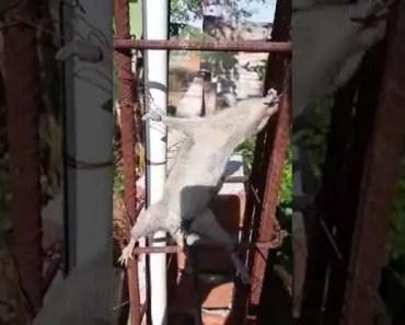 Punishment for rat...funny videos - punishment for rat funny videos