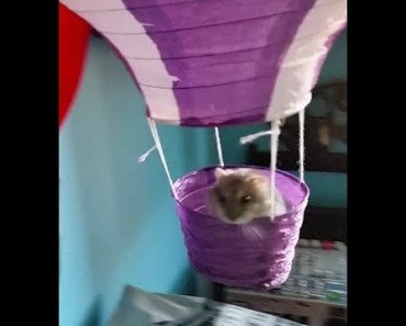 Sugus, my funny hamster In the recording studio - sugus my funny hamster in the recording studio