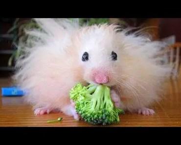 Super fun and humorous ANIMAL videos #7 - Funny animal compilation - Watch & laugh! - super fun and humorous animal videos 7 funny animal compilation watch laugh