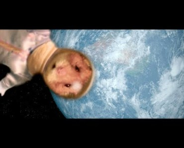 The Adventures of Hammy - The Talking Hamster - Theatrical Trailer - the adventures of hammy the talking hamster theatrical trailer