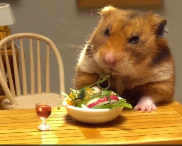 Tiny hamster eating tiny food #3 | Trending Today | Appie Today - tiny hamster eating tiny food 3 trending today appie today