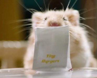 Tiny Hamster Orders Uber Eats - tiny hamster orders uber eats