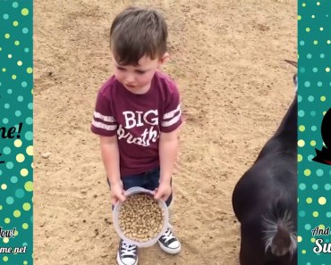 Top 10 of The Day Funny Dogs, cats and horse 7,1,2018 Part6 - top 10 of the day funny dogs cats and horse 712018 part6