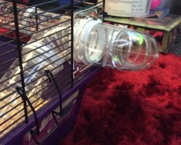 My Hamster - 1518989335 my hamster