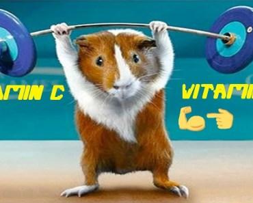 4 you - funniest guinea pigs videos - 4 you funniest guinea pigs videos